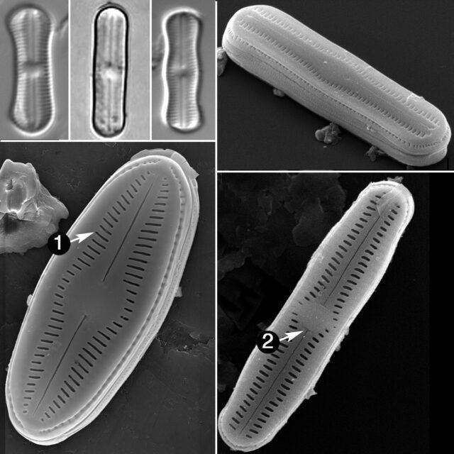 Humidophila Guide