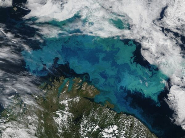 Barents Sea Plankton 2011226