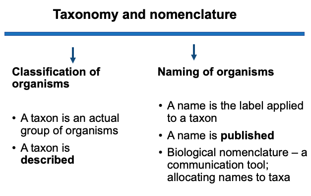 Taxonomy And Nomenclature