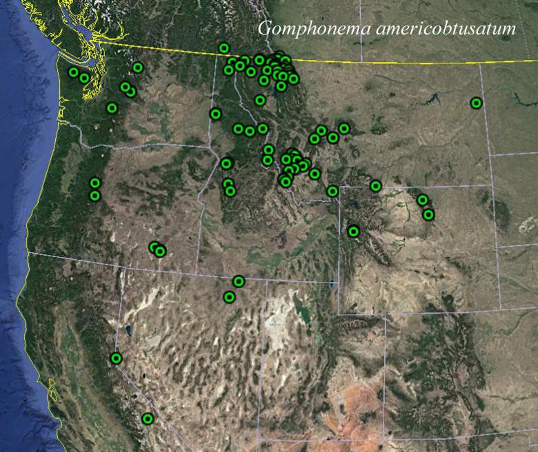 Gomphonema Americobtusatum Map