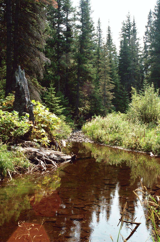 Paradise  Spring  Brook