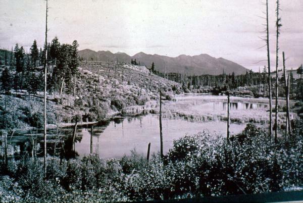 Daphnia  Pond  Elrod