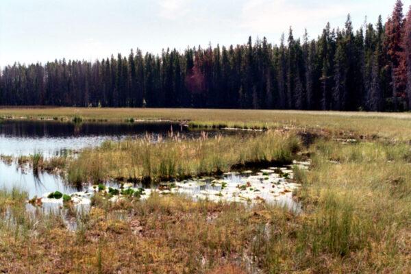 Drosera  Pond