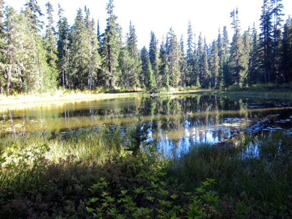 Goat Rocks Pond  Img 5462