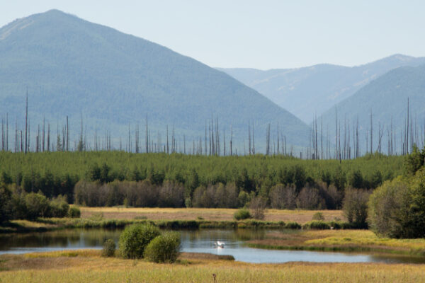 Hidden Meadow Lake