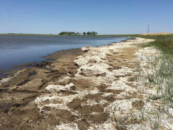 Img 5572  Salt  Lake  Minnesota Resized