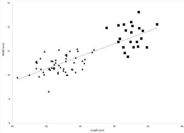 Karen  Prestauroneis Integra  Population  Size
