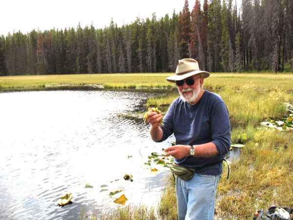 Loren Squeezing  Sphagnum At  Drosera  Pond  Imrna