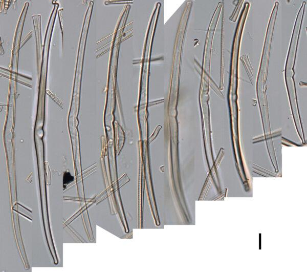 Mbe1563A  Plate 1