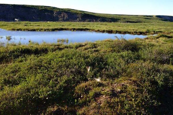 Sample 685601  Wetland Pool Near  Baillie  River