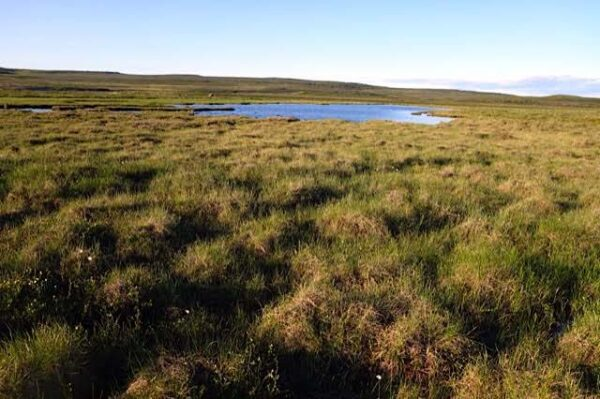 Sample 685701  Wet Hummocks Near  Baillie  River