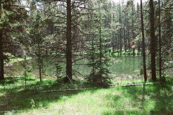 Skinner  Pond 1