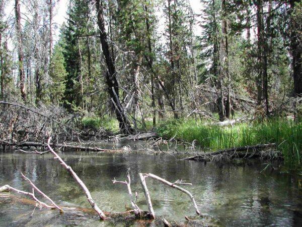Snow  Creek  Or Orsnw1010 2191