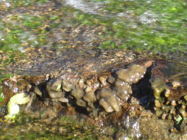South  Boulder  Creek 2010