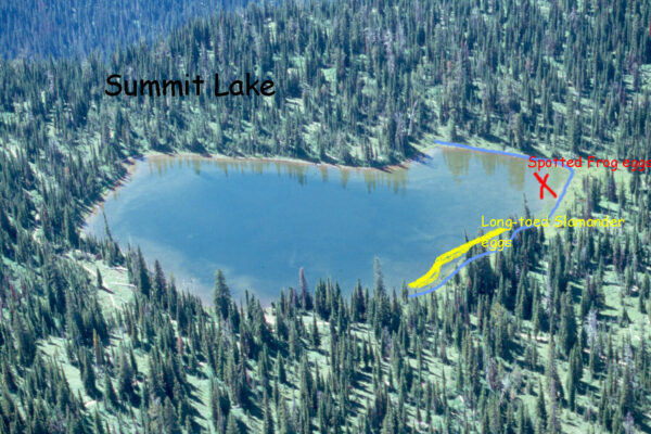 Summit  Lake  General