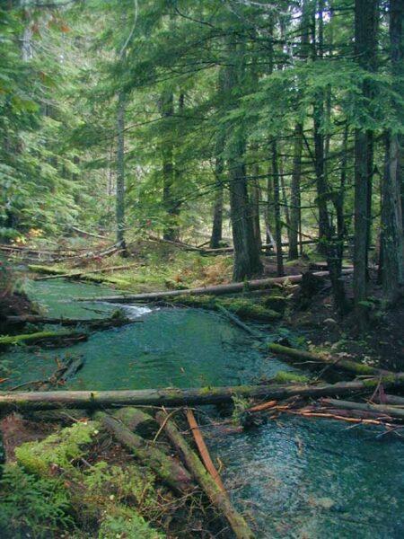 Ross Creek 3