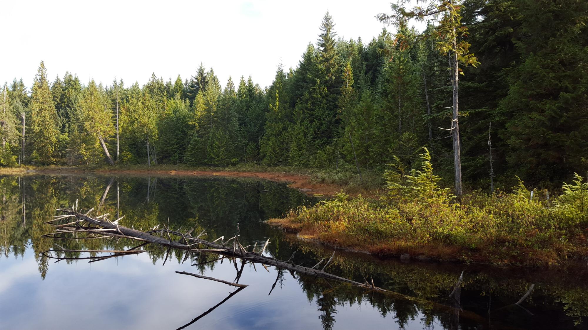 Kings Lake Bog Shoreline