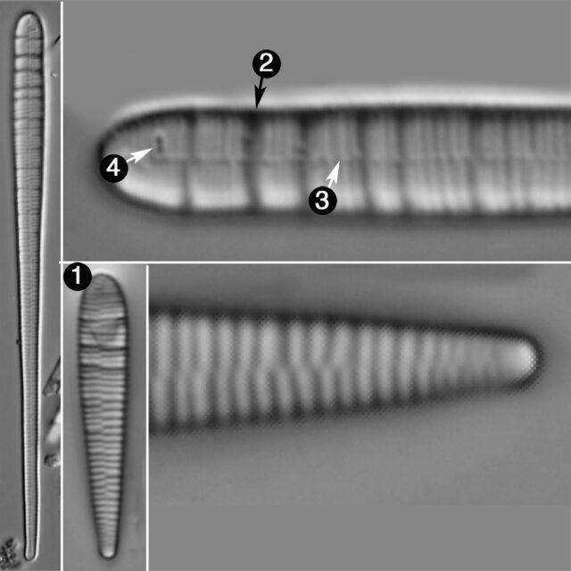 Meridion Circulare Guide