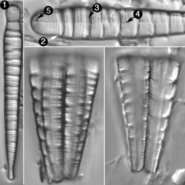 Meridion Circulare Var Con Guide