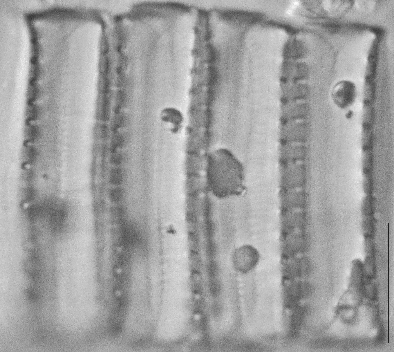 4 Cells  C 1805Ed