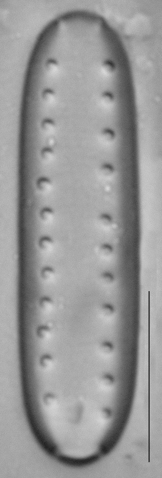 Dscn1908Ed 1 1