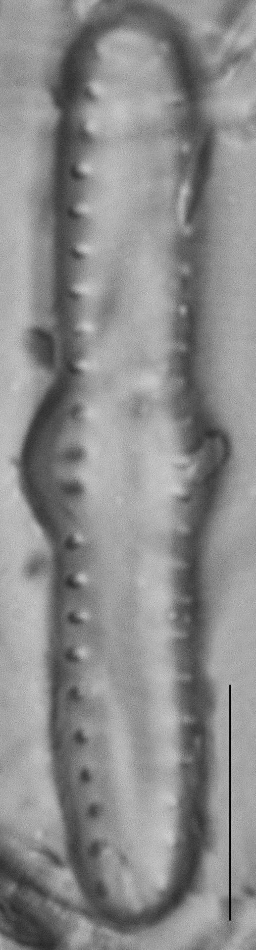 Dscn1935Ed