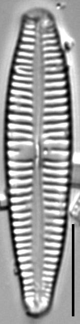 G Sarcophagus 112