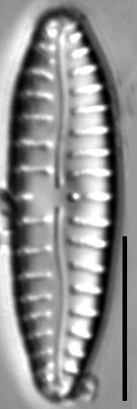 G Sarcophagus 115