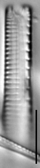 G Sarcophagus 117