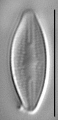 Gc57577  Holosilide 4B 1