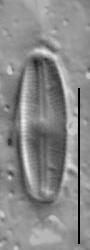 Gs024284  Nufennica 8