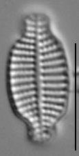 Gsn23403  Kalaterostr 1A