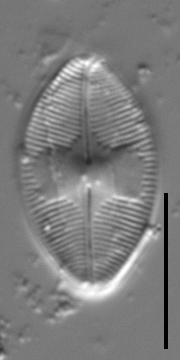 Holotype 1D Crp