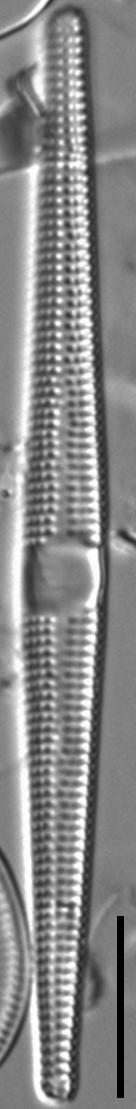 Jkj  Ctenophora 10858X795Modified