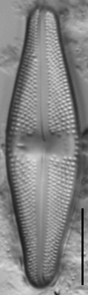 Lut Sigma  Gc48876A 26 Cl