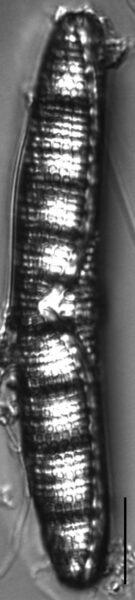 66 Microns