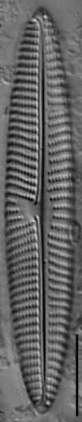 Gs023353  Nageron1
