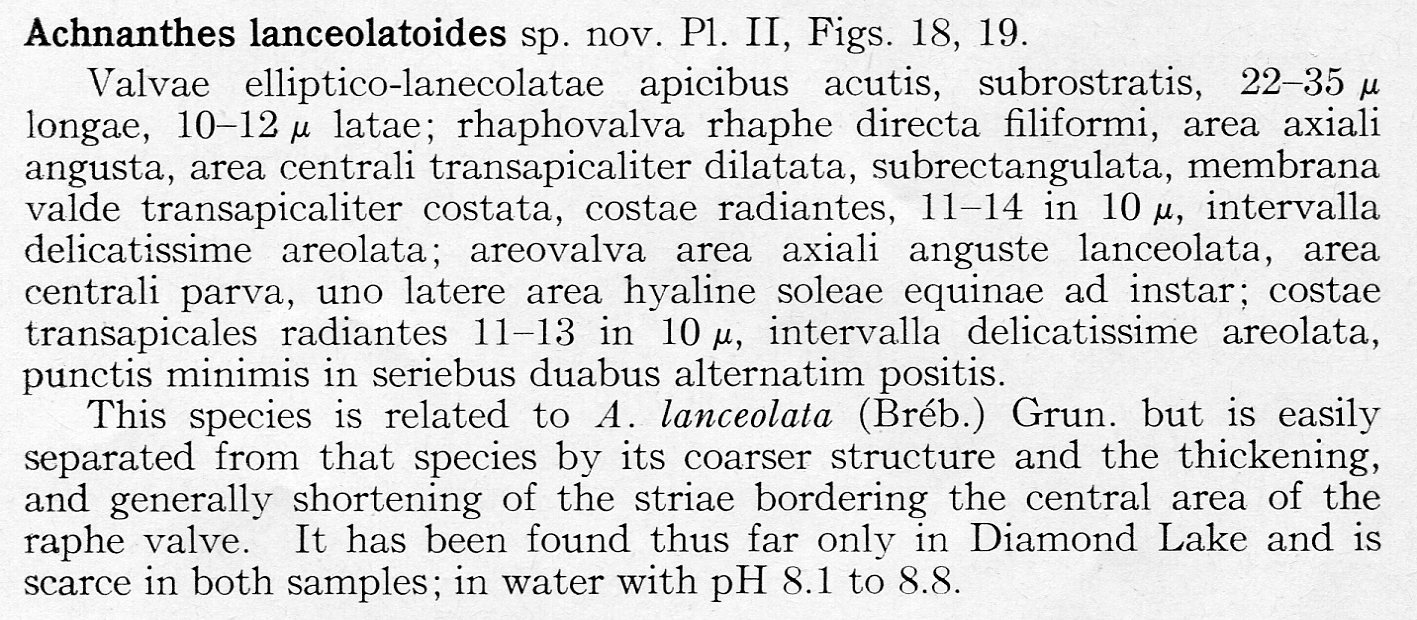 Achnanthes lanceolatoides orig descr