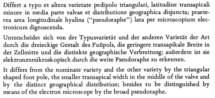 Asterionella ralfsii var. americana orig descr