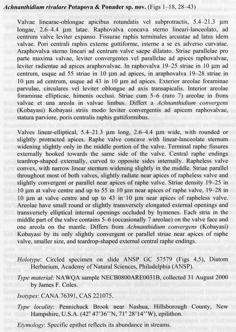 Achnanthidium rivulare orig descr