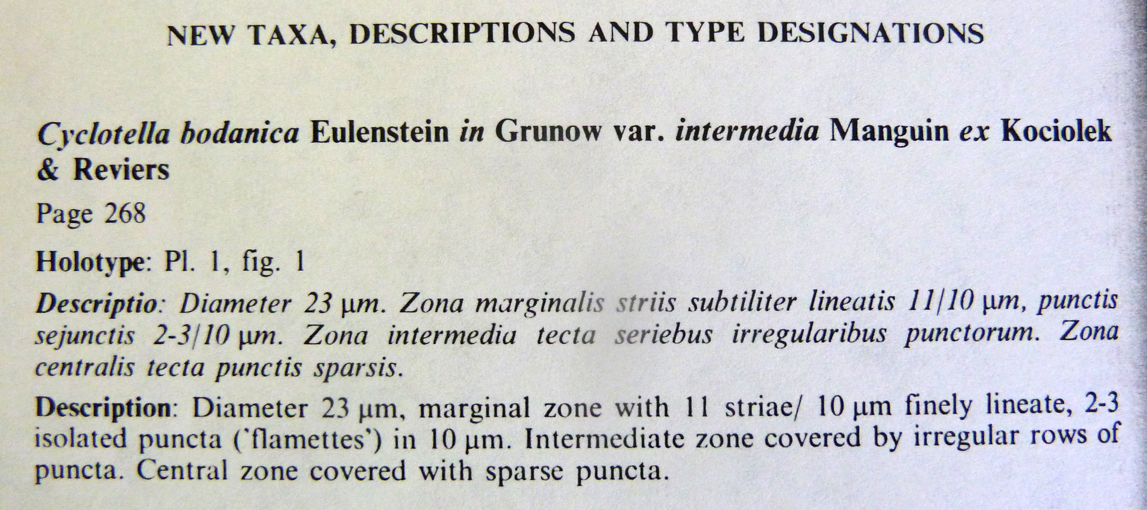 Cyclotella bodanica var. intermedia orig illus