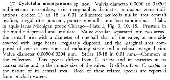 Cyclotella michiganiana orig descr