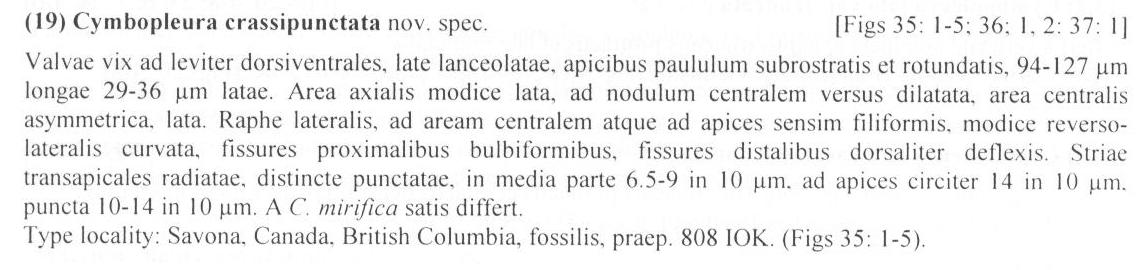 Cymbopleura crassipunctata orig descr