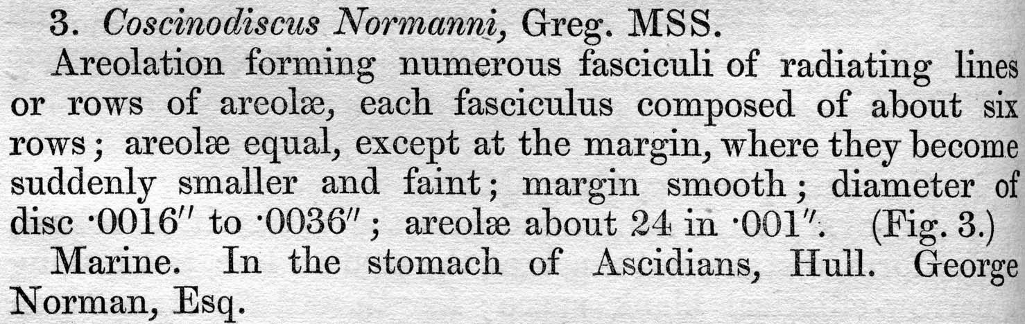 Coscinodiscus normanii orig descr