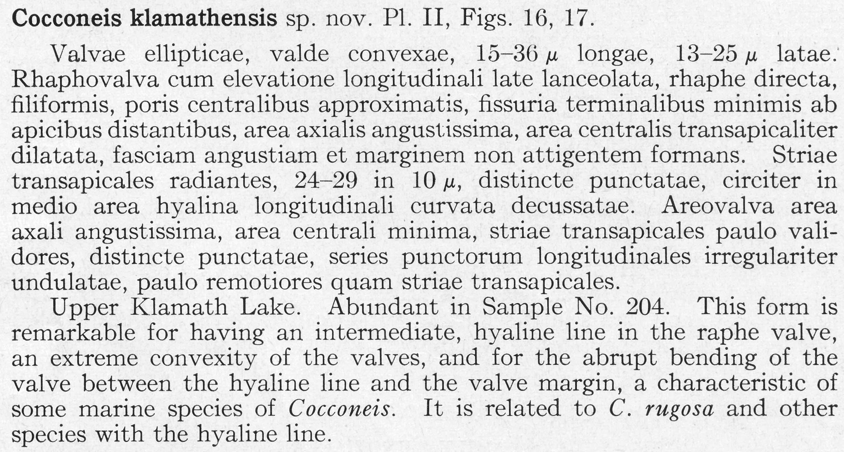 Cocconeis klamathensis orig descr