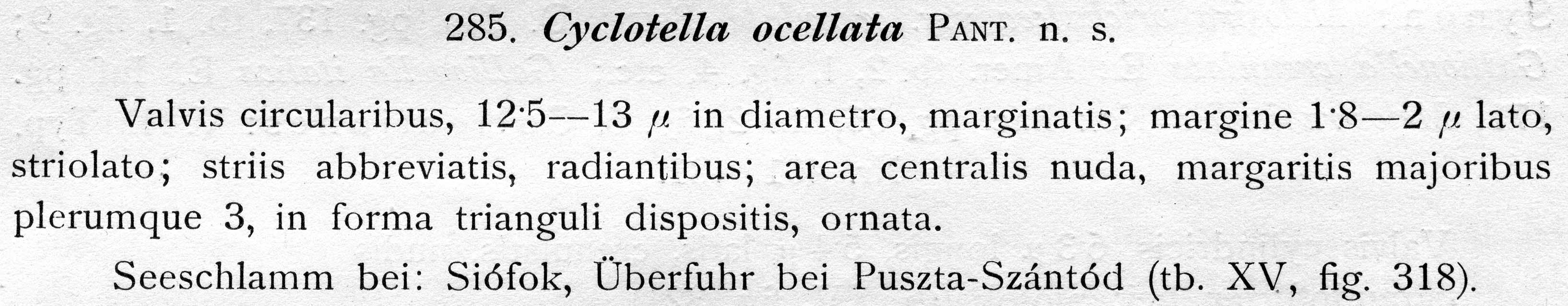 Cyclotella ocellata orig descr