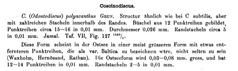 Coscinodiscus polyacanthus var. baltica orig descr