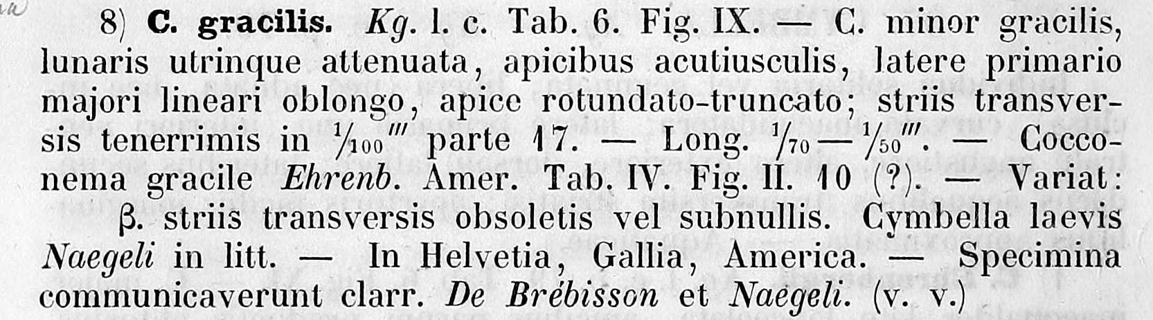 Cymbella gracilis orig descr