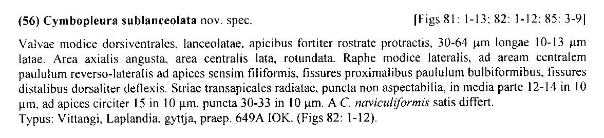 Cymbopleura sublanceolata orig descr