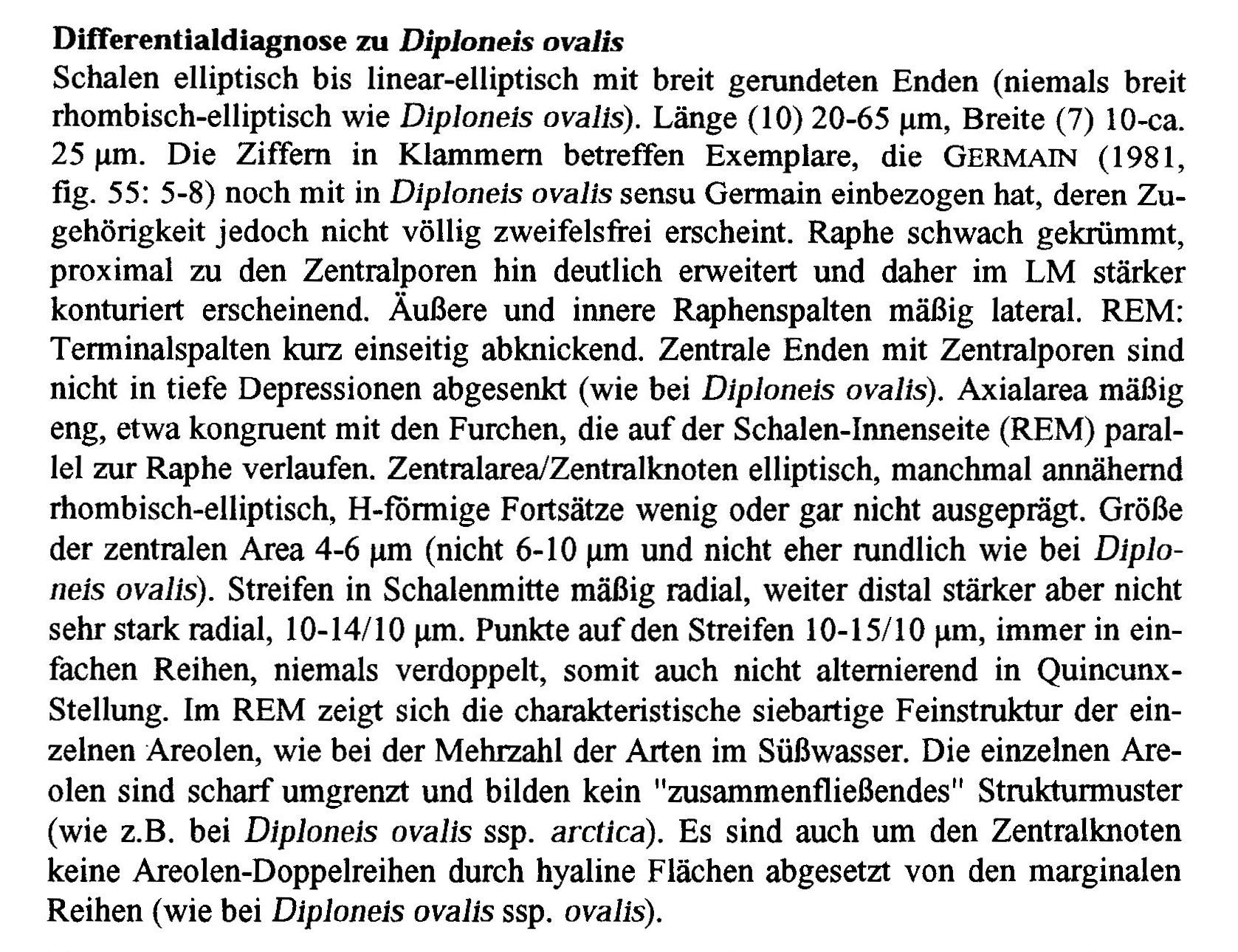 Diploneis Krammeri Origdesc001